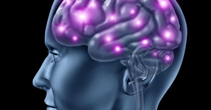 brain-man-model.jpg